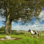 Castlestrange Scribed Stone, Athleague, Co Roscommon_Web Size-2