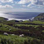 Sheep & Donegal Coastline