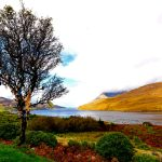 Fairy Thorn Tree, Killery Harbour, Co. Galway.