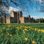 LOOKING OVER DAFFODILS IN THE GROUNDS OF GLAMIS CASTLE (THE CHILDHOOD HOME OF THE QUEEN MOTHER AND BIRTHPLACE OF PRINCESS MARGARET), VISIBLE BEHIND, NORTH OF DUNDEE, ANGUSPIC:PAUL TOMKINS/VisitScotland