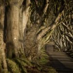 25940_Game of Thrones_ - The Dark Hedges_The Kingsroad