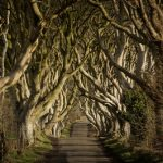 25943_Game of Thrones_ - The Dark Hedges_The Kingsroad