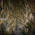 25947_Game of Thrones_ - The Dark Hedges_The Kingsroad