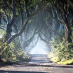 32300_Game of Thrones_ - The Dark Hedges_The Kingsroad